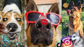 FUNNIEST DOGS ON THE INTERNET  Funny dog compilation