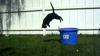MY CAT CAN FRONT FLIP!!!!!