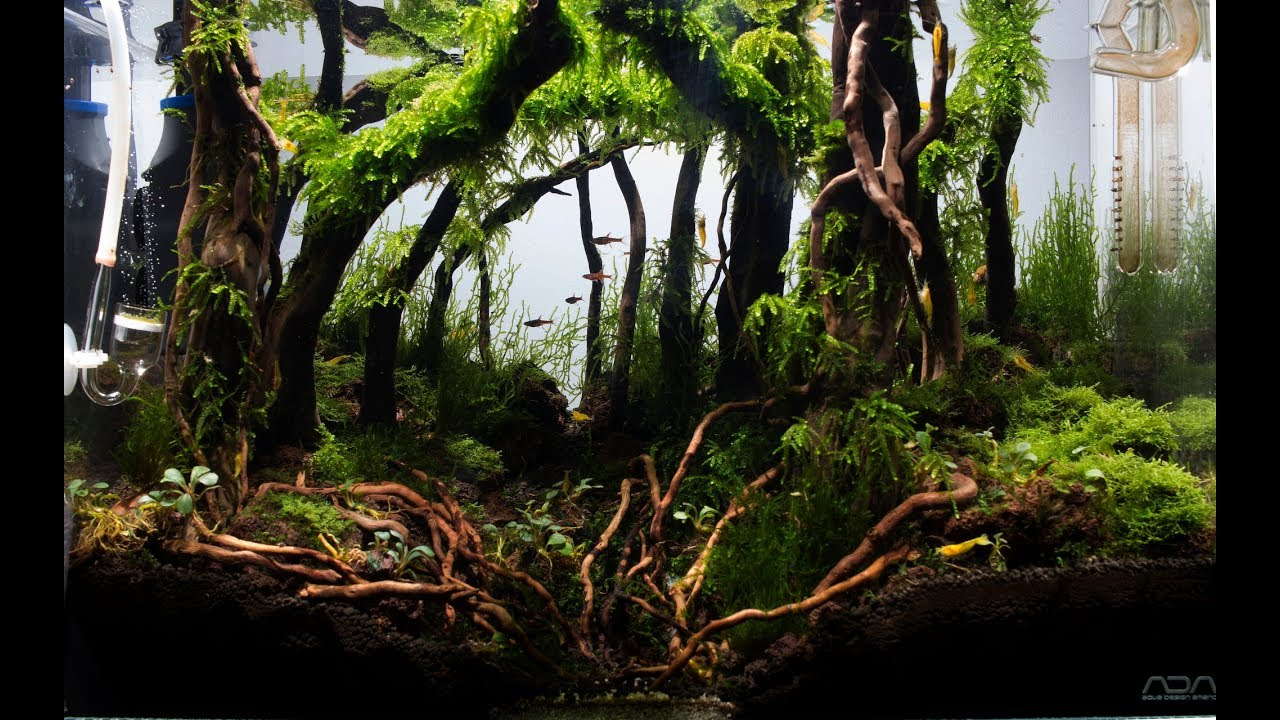 Aquascape Forest Nature Aquarium Aquascaping Day 86 Ada 45p Youtube