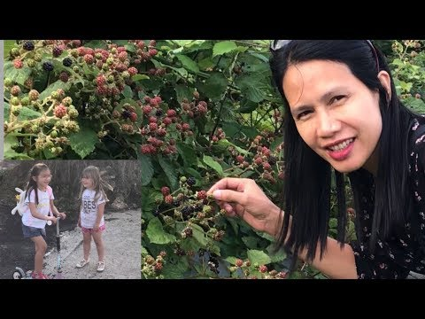ชิมผลไม้ป่าBlackberry แอบเปิ้ล เดินไปบ้านโอลิเวีย เมลีเซอร์ไพรส์ไม่บอกเพื่อน