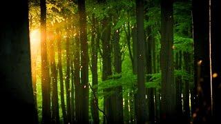 Europas Wildnis - Alte Buchenwälder Deutschlands