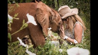 Sheldrick Wildlife Trust overview 2018