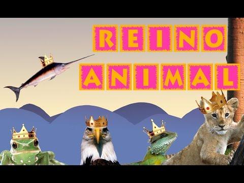 el-reino-animal-para-niños-|-videos-educativos-para-niños