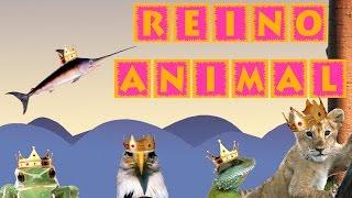 El Reino Animal para Niños   Videos Educativos para Niños