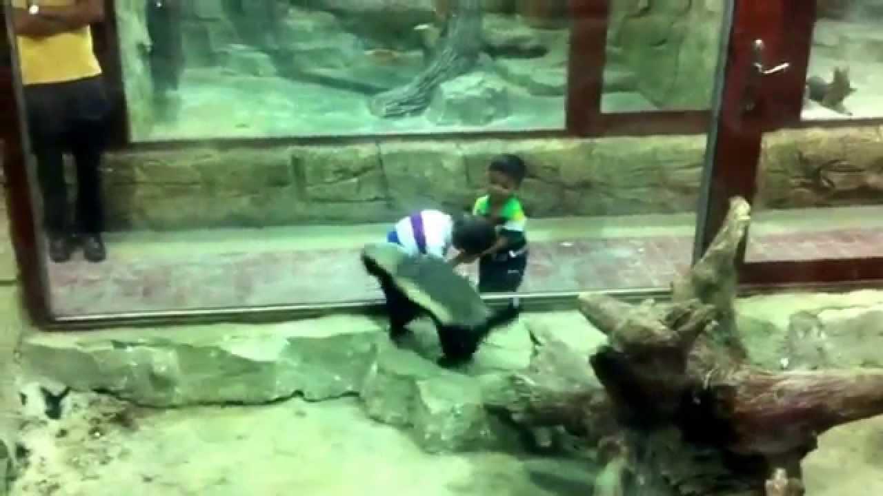 أطفال عراقيين يلعبون مع حيوان الغرير--Iraqi children playing with badger animal