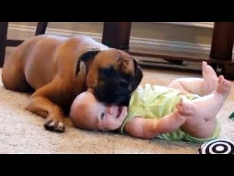 Cutest BABIES Laughing at Pets will MAKE YOUR DAY - TRY NOT TO DIE from Laughing