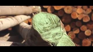 Drewno Oxytree w tartaku.