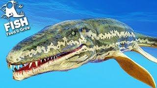 PROGNATHODON O NOVO MEGA BOSS = FEED AND GROW FISH