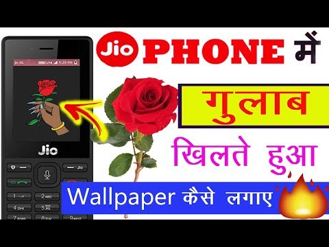 Jio Phone Me Rose Animation Wallpaper Kaise Lagaye | Jio Phone Me Live Wallpaper Kaise Set Kare