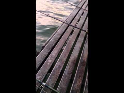 พรานเจ๋ง แพนันทนา #ปลาสวายน้ำจืด