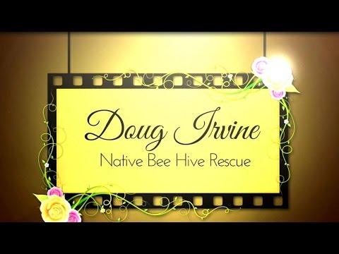 Australian Native Bee Hive Rescue