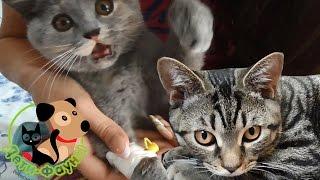 Котенок съел иголку, нитку, пакет...Что делать?