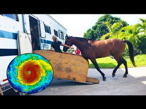 Evacuating My Horse From South Florida- Hurricane IRMA
