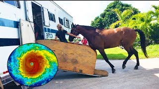 evacuating my horse from south florida hurricane irma