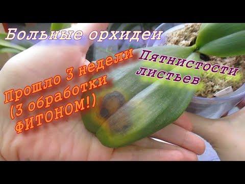 Больные орхидеи. Пятнистости листьев. ФИТОН. Результат 3 недели и 3 обработки.