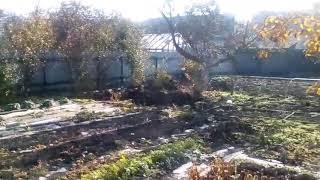 Суббота//дела садовые//урожай яблок//зелень//семена