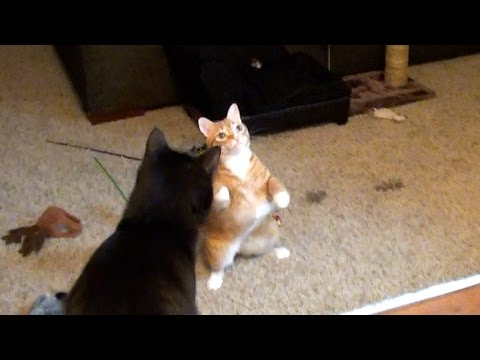 What Happens When Cats See a Moth!
