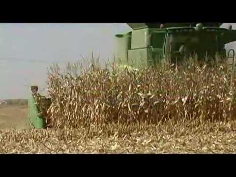 Harvest 2012  New David Stock Farm Services, Inc.