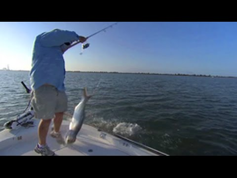 Addictive fishing fail crazy fish jumps in boat youtube for Crazy fishing videos