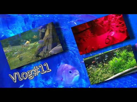 Vlog#11 Biggest Aquarium and underwater zoo Inside the Mall….😍😍😍