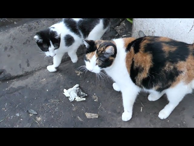 Hungry kitten with mom from the basement