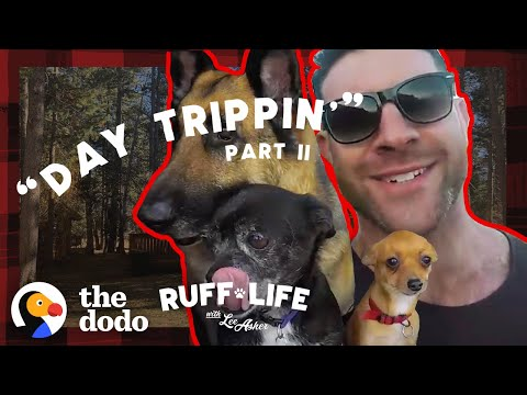 Lee Sneaks His 9 Dogs Into A Hotel — And Rescues 16 More | Ruff Life With Lee Asher
