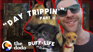 Lee Sneaks His 9 Dogs Into A Hotel  And Rescues 16 More | Ruff Life With Lee Asher