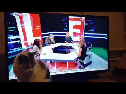My cat learns about Litecoin on Sky News UK