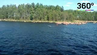 Очевидцы сняли на видео горбатого кита в Выборгском заливе