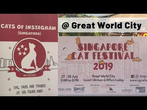 Singapore Cat Festival 2019 @ Great World City   Preparing for Your First Cat