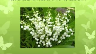 видео Викторина по экологии 6 класс с ответами