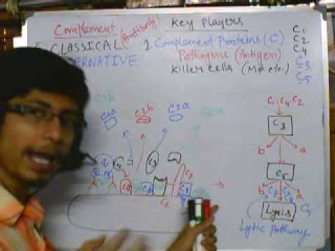 complement system part 3 (Classical pathway)