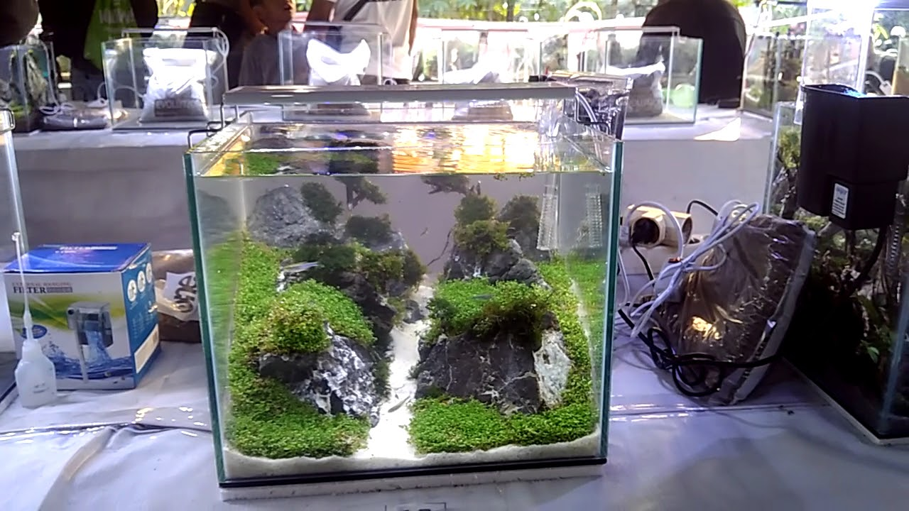 Kontes Aquascape Pemula Indonesia 20 8 2017 The Most Popular High