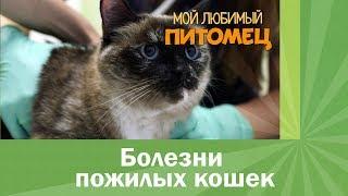 Болезни пожилых кошек. Чего опасаться?