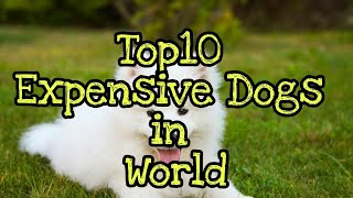 Top 10 Expensive Dogs | Top 10 Expensive Dogs in World | Dog Lovers Video