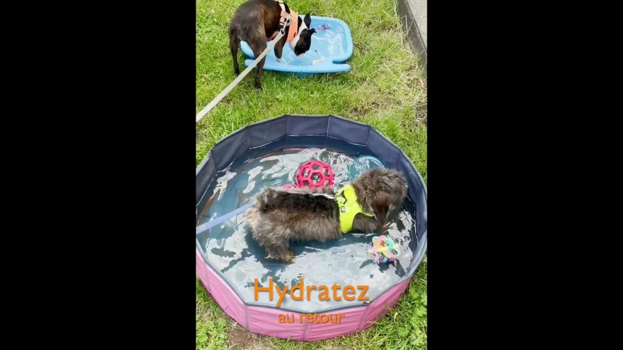 La balade ... des chiens heureux