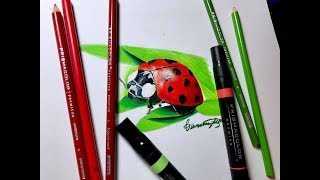 Realistic Lady Bug Drawing Using Prismacolor - Timelapse