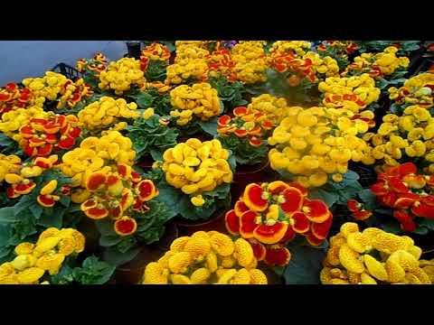 Цветы К 8 Марта. Быстрый Обзор.