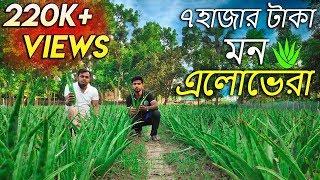 ১০ বিঘা জমিতে এলোভেরা চাষ করে ব্যাপক সফল নাটোরের এই যুবক | aloe vera cultivation in bangladesh