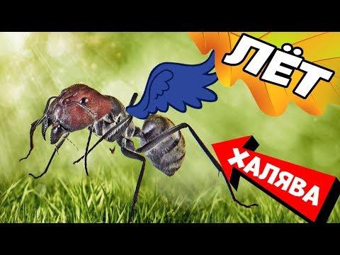 Как поймать муравьев видео