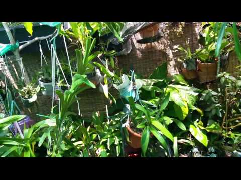Orchid Garden Clean-up Time