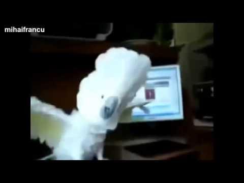 И тут я понял, что хочу попугая!