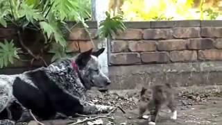 приколы про животных видео бесплатно в хорошем