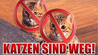 Unsere Katzen SIND WEG!
