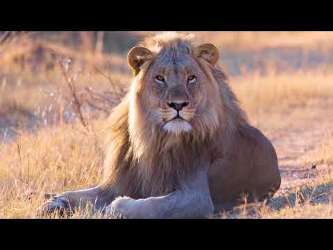 SAFARI South Africa  A Time Lapse Film