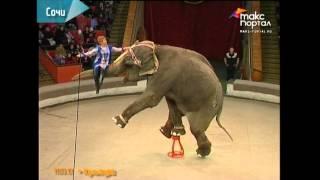 видео афиша сочинского цирка