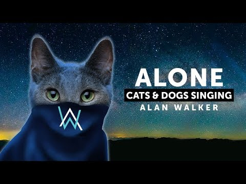 Cats & Dogs Singing Alone  Alan Waker feat Ava Max