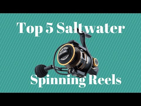 Top 5 Saltwater Spinning Reels