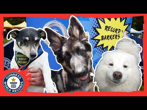 Guinness World Records goes to DogFest for dog record breaking! - Guinness World Records
