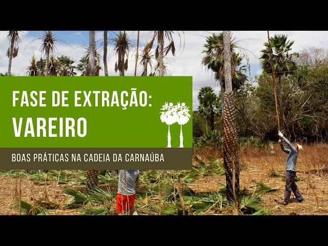 Vareiro - Boas Práticas na Cadeia Produtiva da Carnaúba